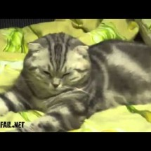 Fail Compilation - March 2012 - Pictures nr 495