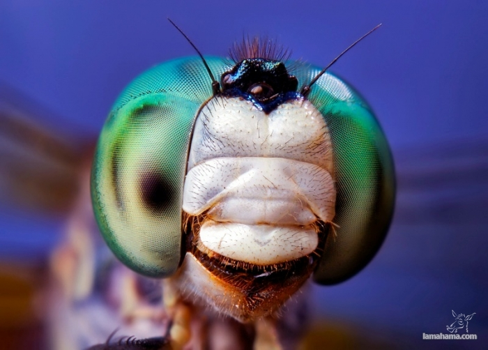 Macro world - Pictures nr 13