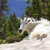 Śmieszne zwierzęta - Zdjecie nr 3